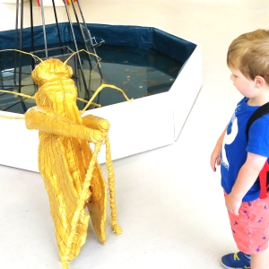 Just a casual Wednesday - chatting to a large golden grasshopper!